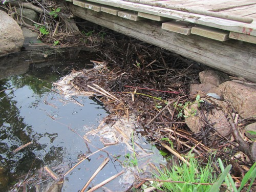 One of the old beaver dams on Aucoin Brook before removal, making a large barrier for the fish to get through.