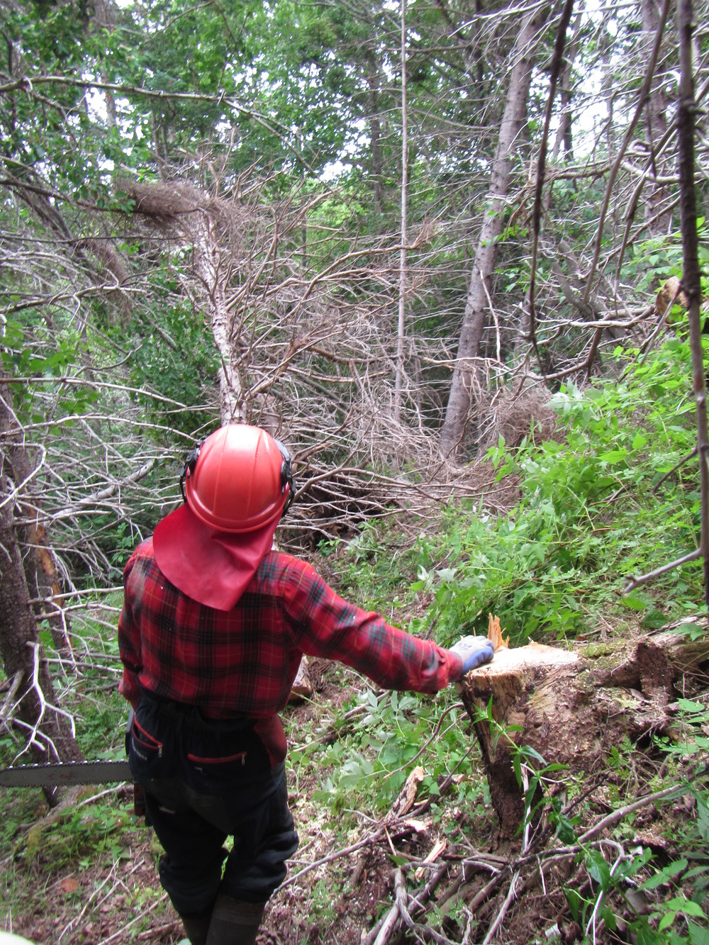 Chainsaw operator Albert Deveau