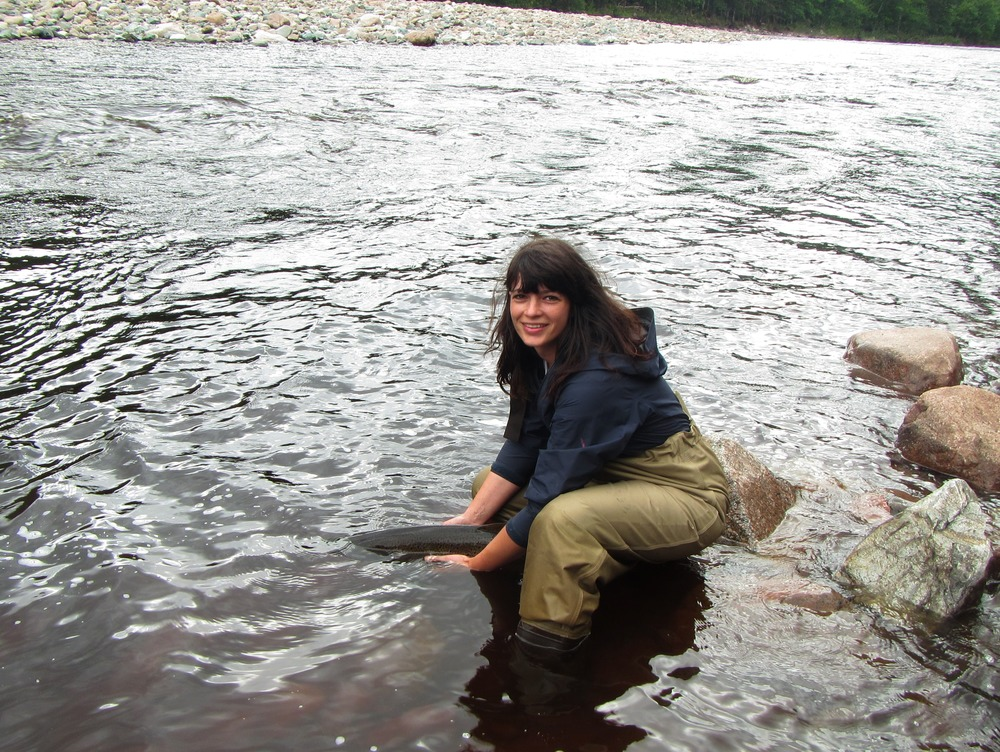 Jillian Baker, with the Cheticamp River Salmon Association, helping release a large adult salmon