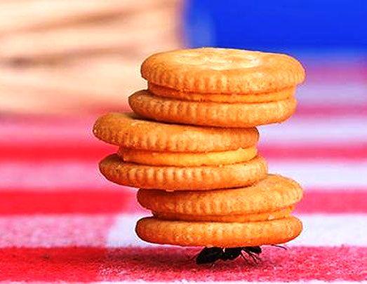 Hard-Work-Ant.jpg