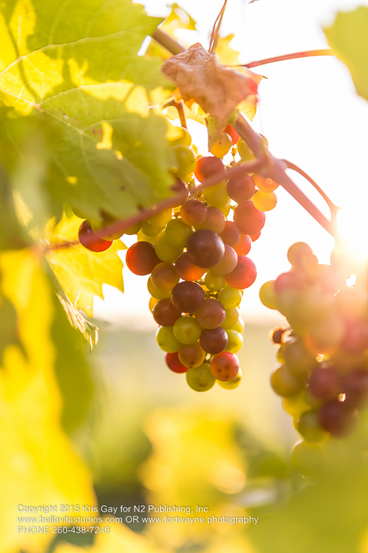 fort-wayne-commercial-photographers-photography-photos-20150723-country-heritage-winery-vineyard-1132