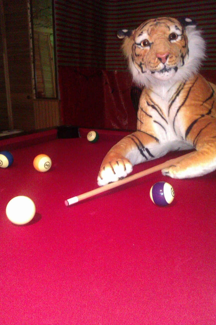 "Get a game of pool in with my Tig=bros. "" Hey buddy, how bout you keep quiet while i shoot. I dont roar when you shoot do i? Sheesh."""