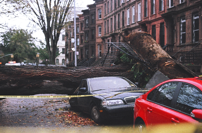 MacDonough Street Tree Down After Sandy.jpg