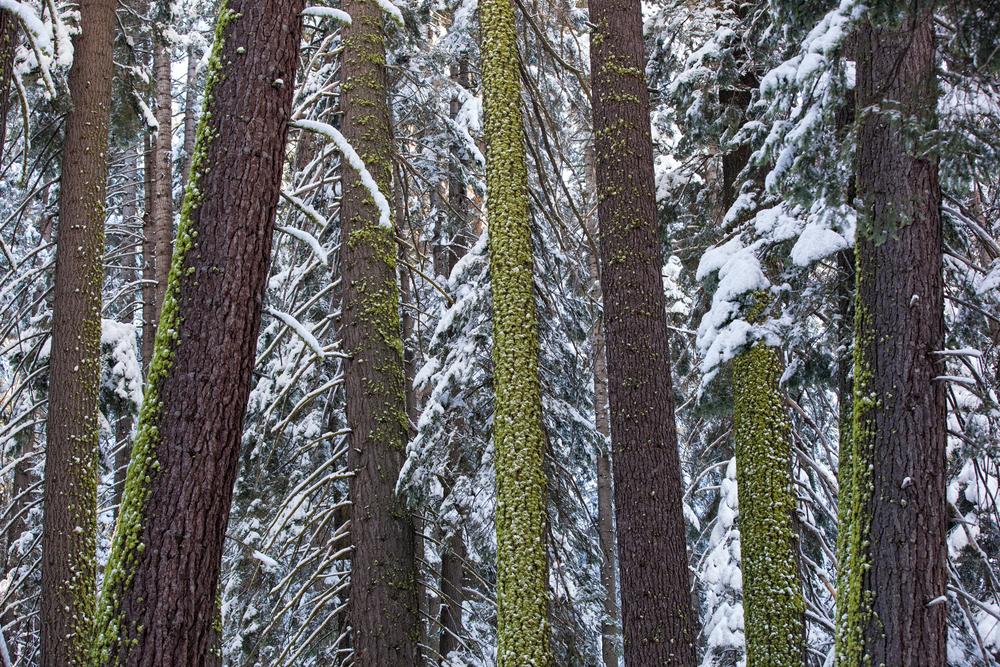 Landscape-Jason-Bax-Yosemite_California_0312.JPG