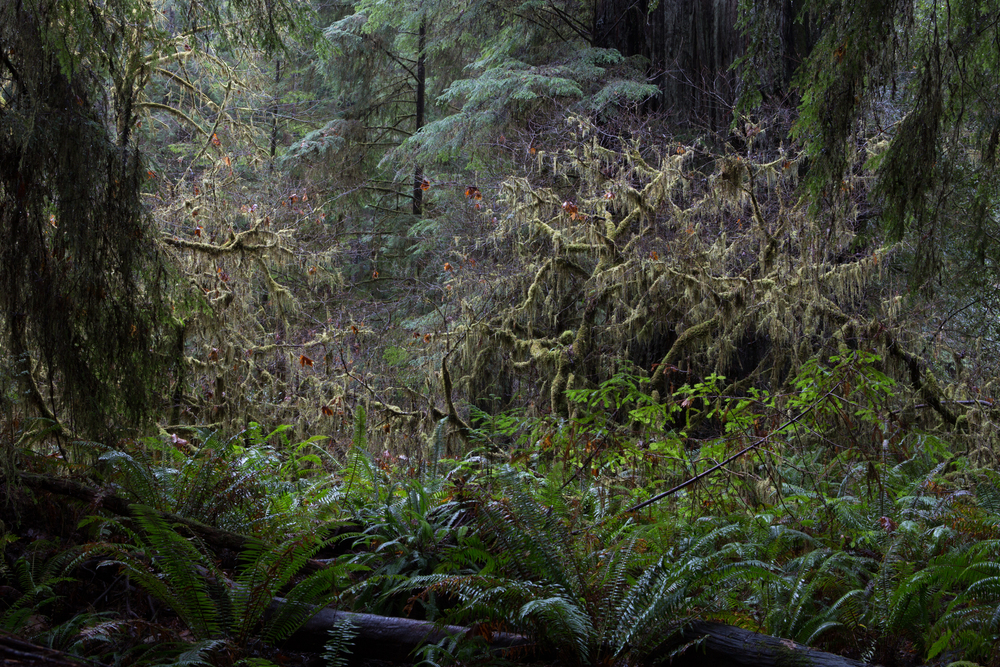 Landscape-Jason-Bax-Humboldt_Redwoods_1421.JPG