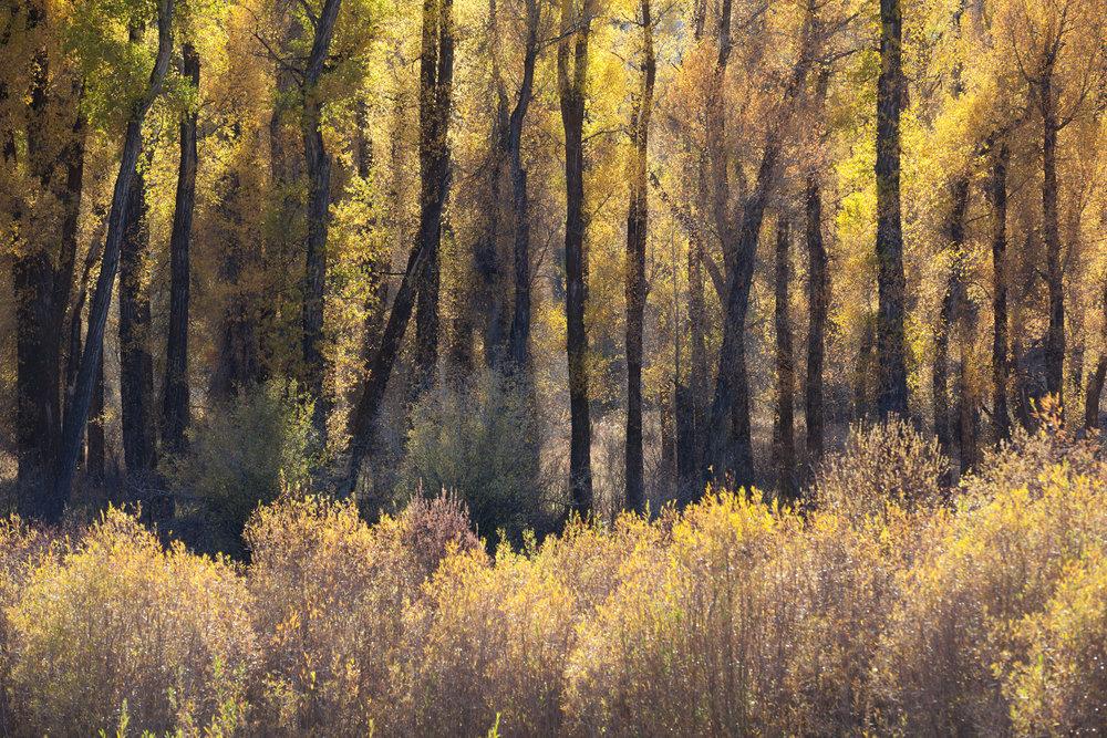 Landscape-Jason-Bax-Grand_Teton_Wyoming_9364.jpeg