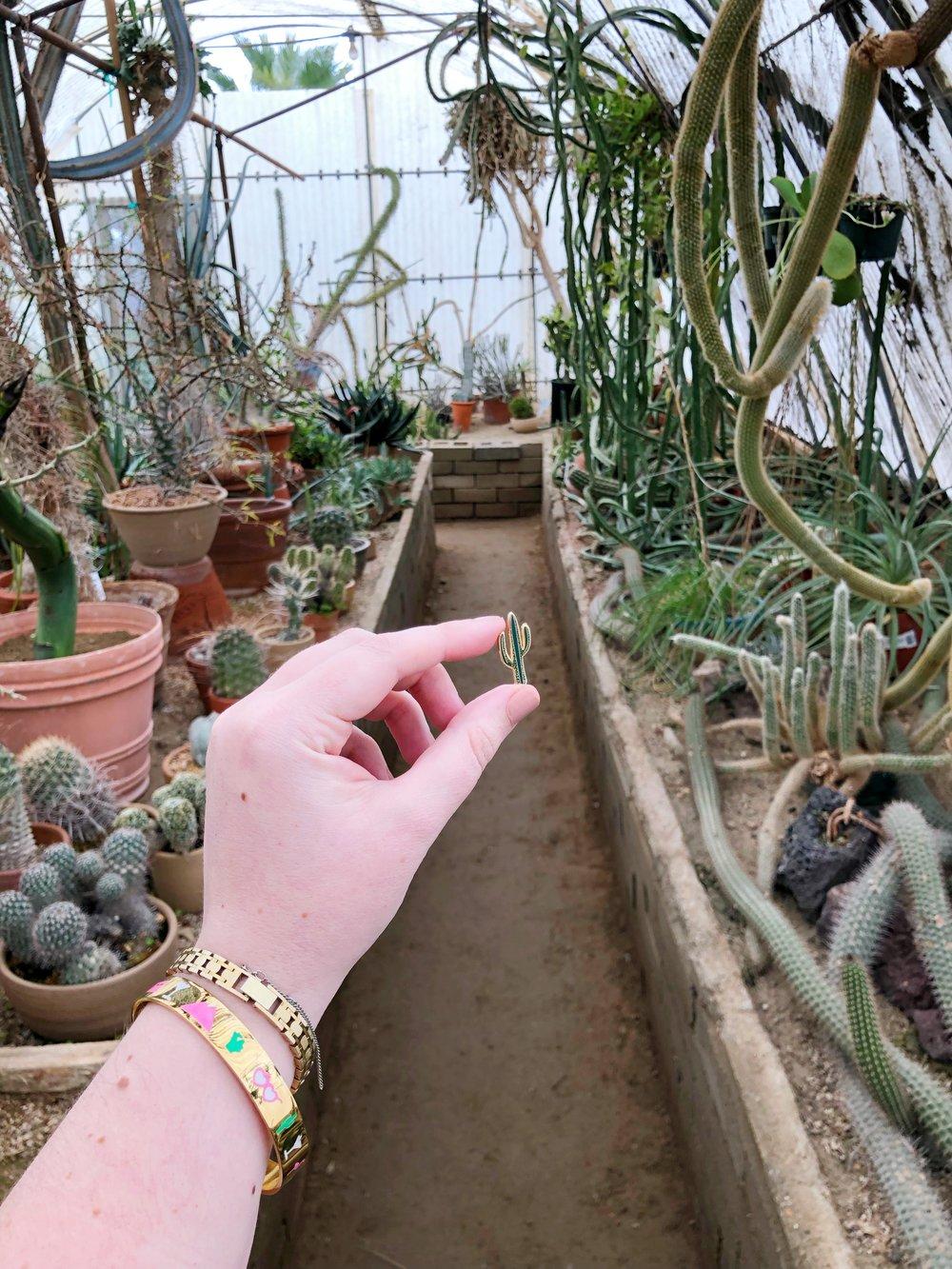 moortenbotanicalgarden_cactus_palmsprings.jpeg
