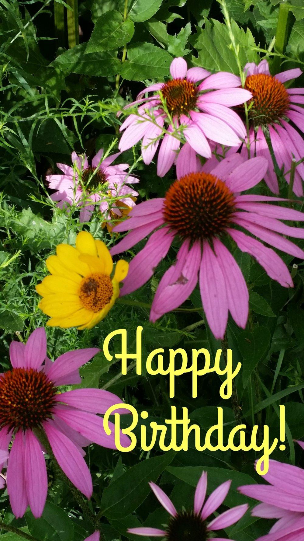 HBwildflowers.jpg