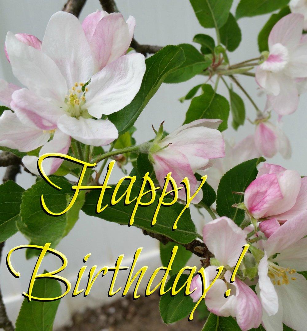 appleblossoms_picmonkeyed.jpg