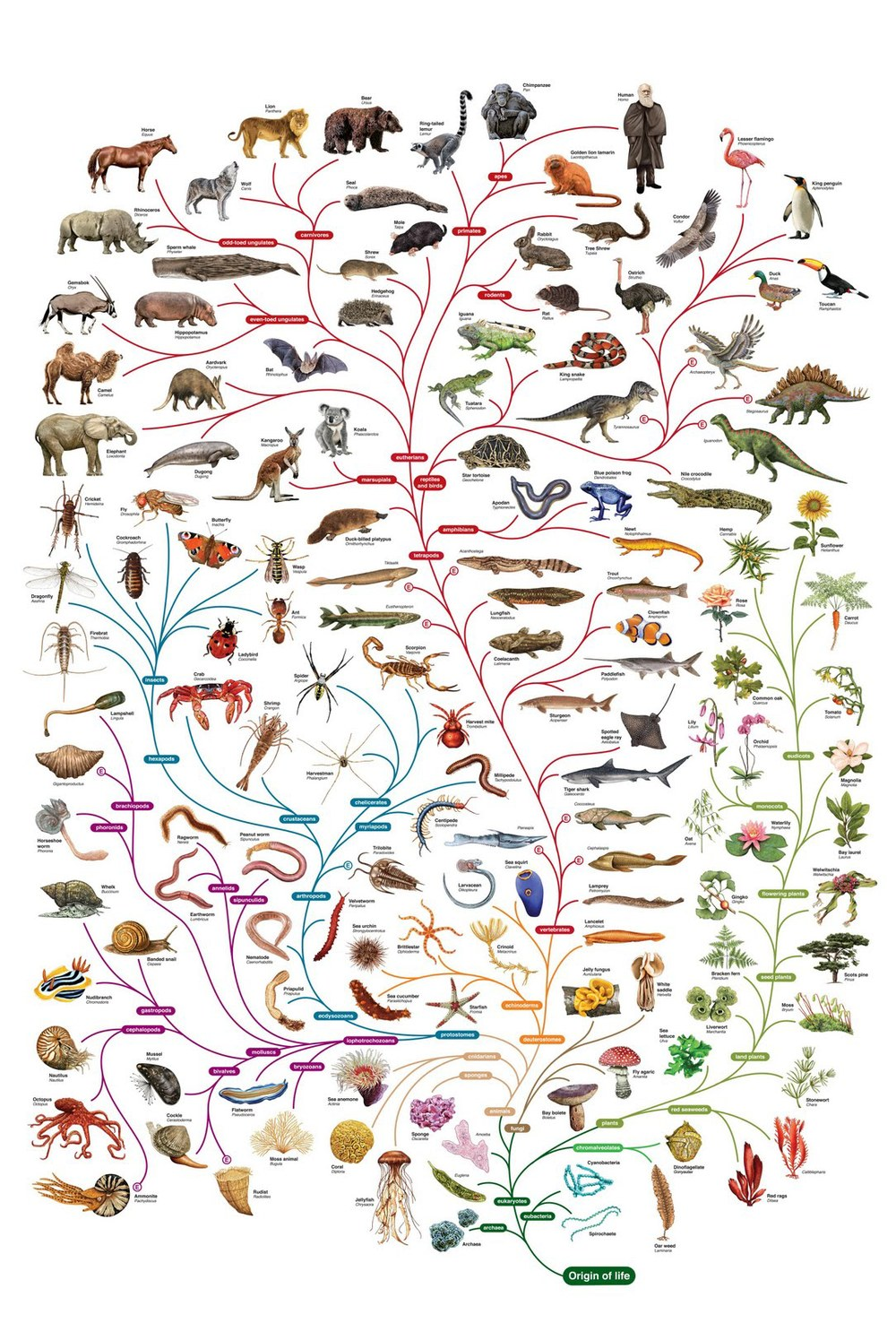 All the ways algae has mutated and evolved in 2.7 billion years...