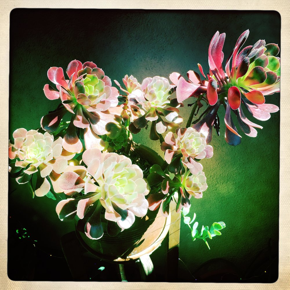 A bouquet from my good friend courtney reid became one of my favorite house plants.