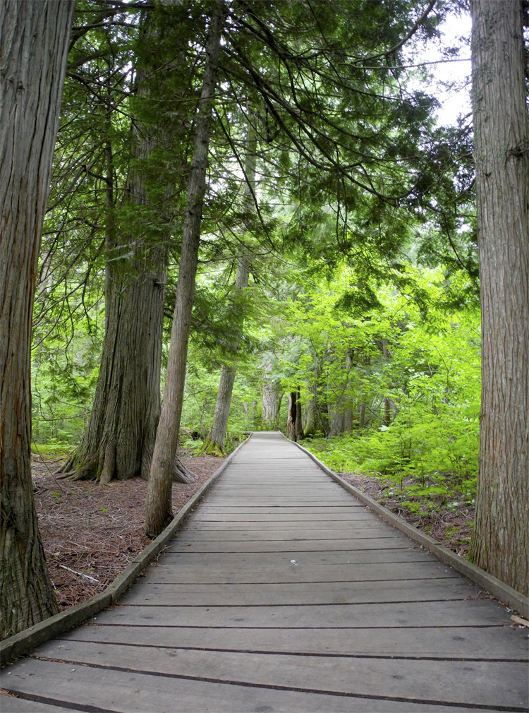 Trail of the Cedars. Accessible boardwalks through the forest?! Yes, please.