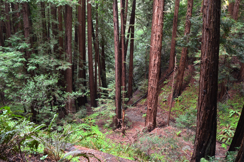 Muir Woods National Monument  |  California - via http://jenniferesnyder.com/blog