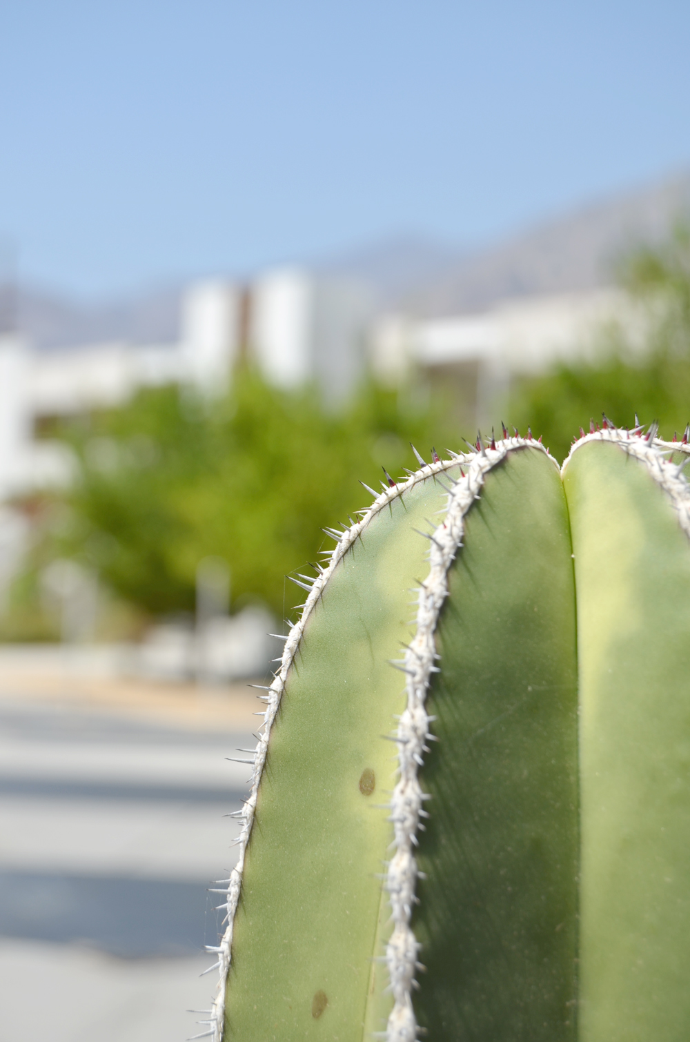 Palm Springs, California // Cactus at The Ace Hotel
