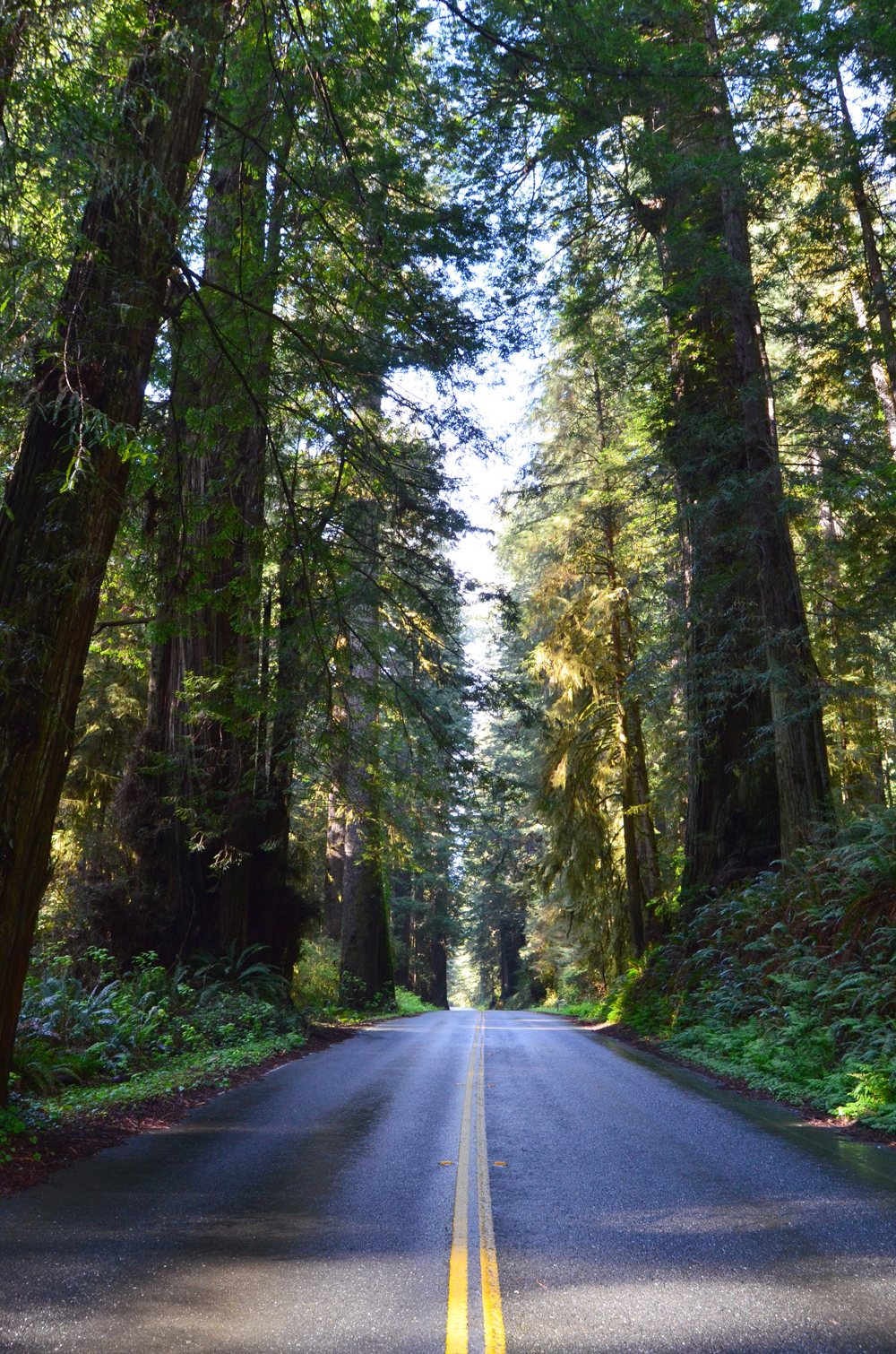 Newton B. Drury Scenic Parkway   // Northern California