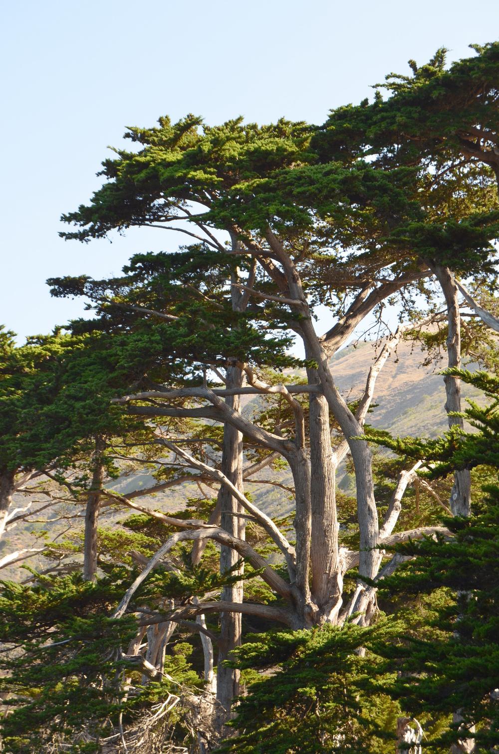 Big Sur Coastline // California