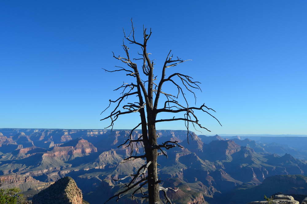 Grandview Point // How to Spend Your Birthday Alone at the Grand Canyon in 31 Simple Steps