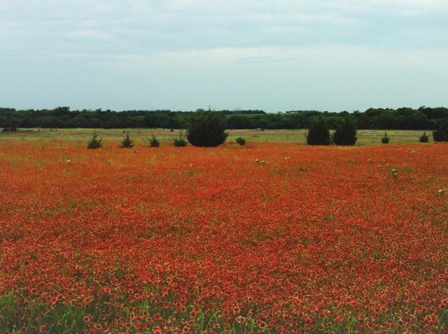 field 2.jpg