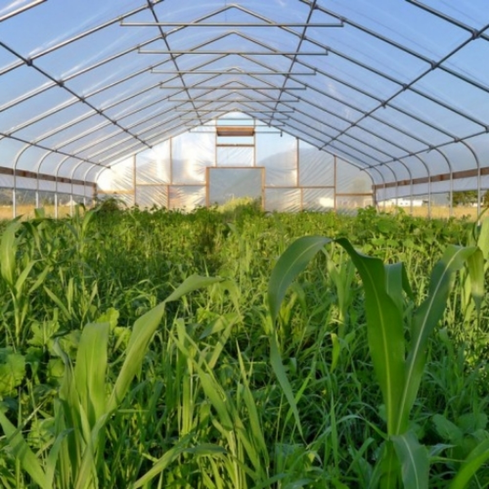 Seasonal High Tunnels    Verdant Stewardship is currently organizing the   Detroit-Wayne County Seasonal High Tunnel Educational Initiative   through the   Southeast Michigan RC&D Council  . This program provides technical assistance to assist urban farming operations with using seasonal high tunnels (commonly known as hoophouses). Funded by the USDA Natural Resources Conservation Service, this project aims to expand access to fresh food in the Detroit area.