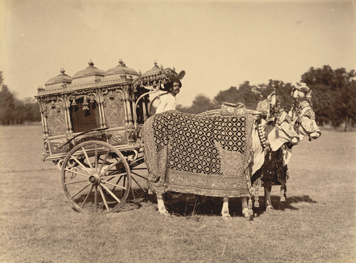 Silver zenana carriage at Baroda, Gujarat from the Curzon Collection, 1890s.Photographer unknown. The enclosed carriage ensured the seclusion of female members of the royal household when travelling. The lavishly decorated two-wheeled carriage is drawn by caparisoned bullocks and belonged to Gaekwar Sayaji Rao III (ruled 1875-1939), 12th Maharaja of Baroda. He owned a collection of exotic transport, which also included golden carriages and a miniature carriage drawn by deer.