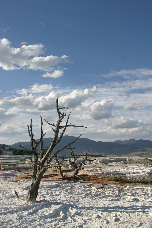 Yellowstone | 2007