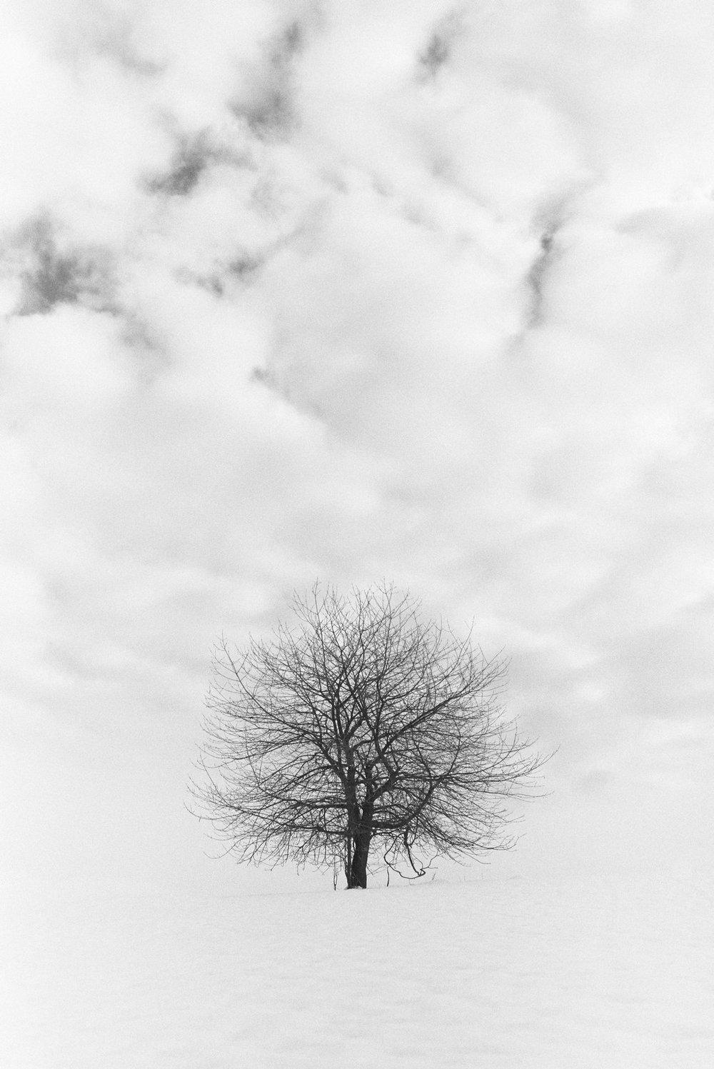 Landscape_16.jpg