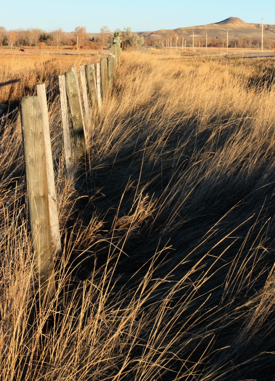 Prairie grass, Ucross, Wyoming