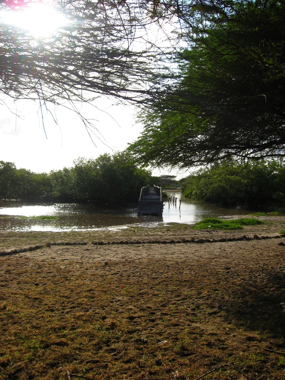 Bridge through mangroves, Lamu, Kenya