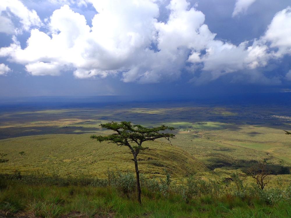 Lone tree, Mt. Longonot, Kenya