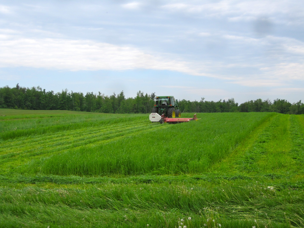 First cutting in Hawley.jpg
