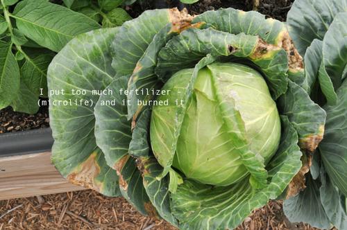 how-to-garden-raised-beds-gardening-urban-gardening-58.png
