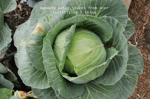 how-to-garden-raised-beds-gardening-urban-gardening-57.png