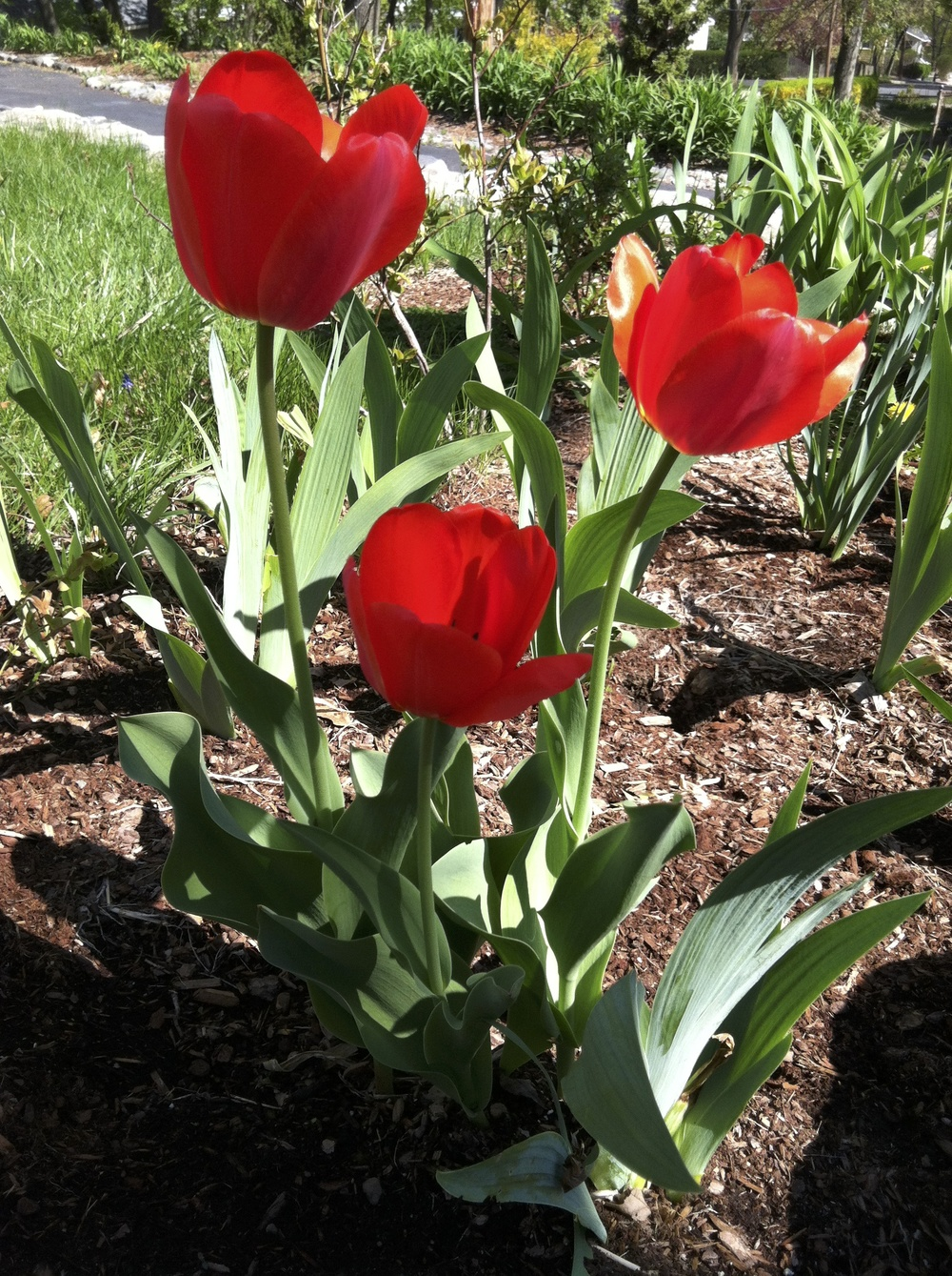 SpringFlowersEatingDisorderRecovery.jpg