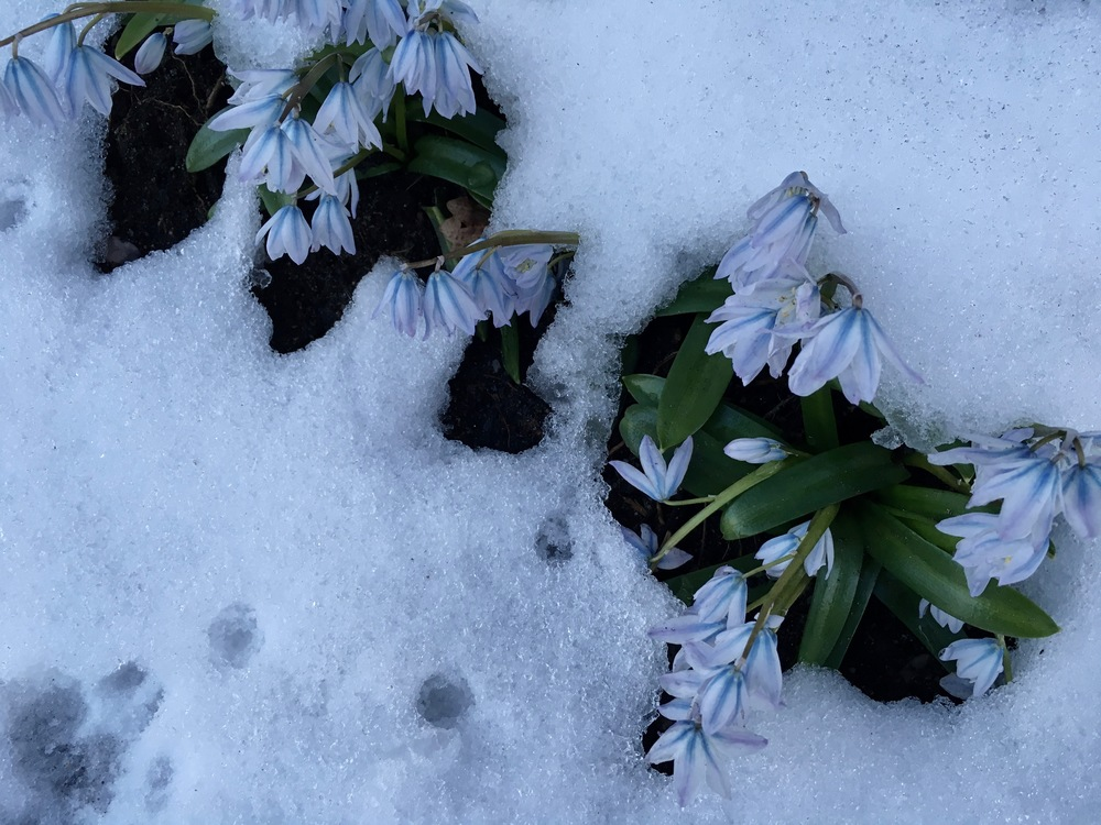 SnowDropsAcceptanceEatingDisorderRecovery