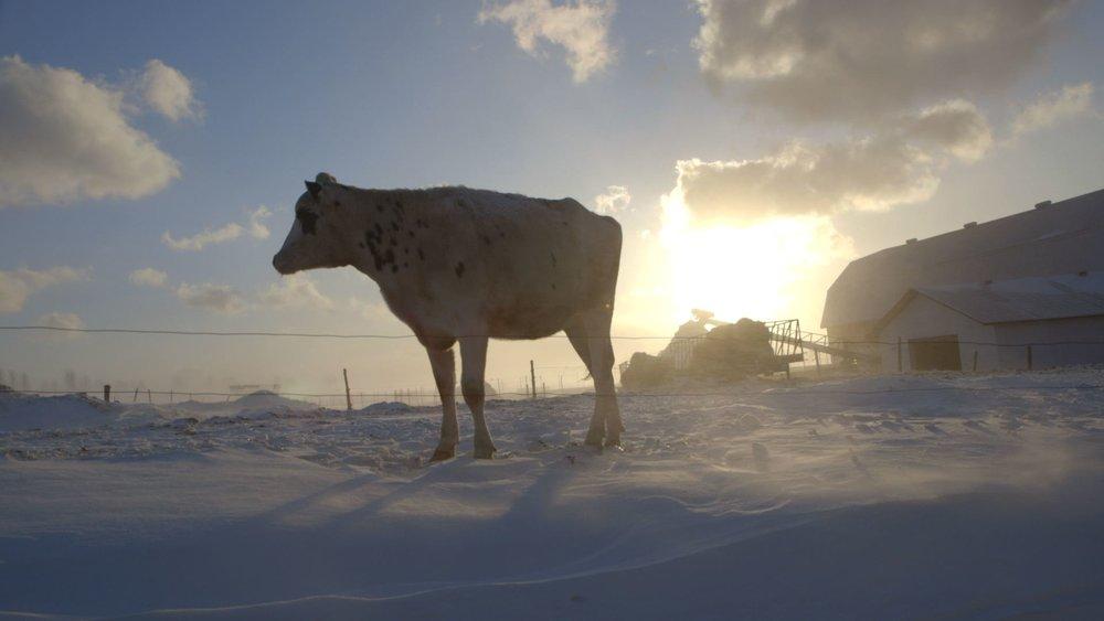 Le plancher des vaches  de Anaïs Barbeau-Lavalette et                 Émile Proulx-Cloutier  75 min, Québec, Canada, 2015