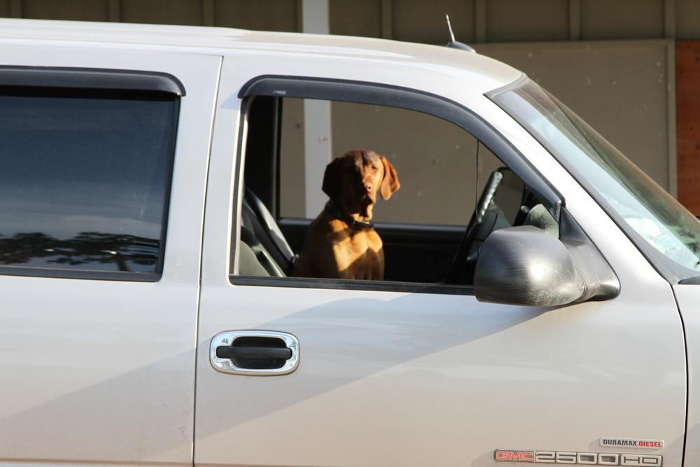 Bodie Larson/chauffeur