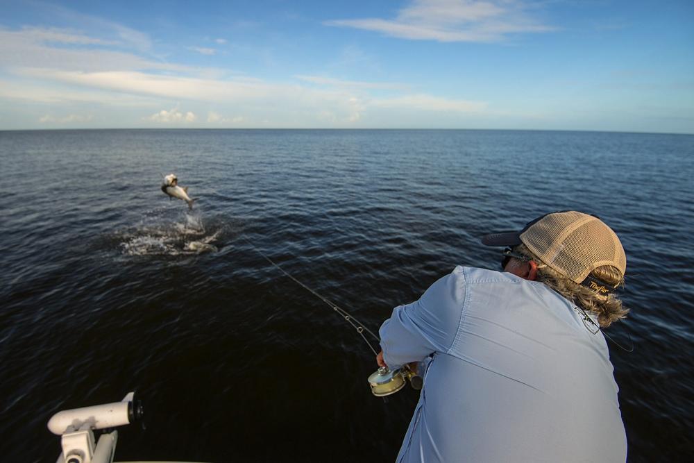 Everglades Tarpon on Fly