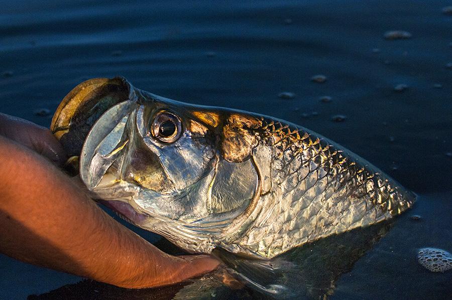 Islamorada Tarpon Fishing