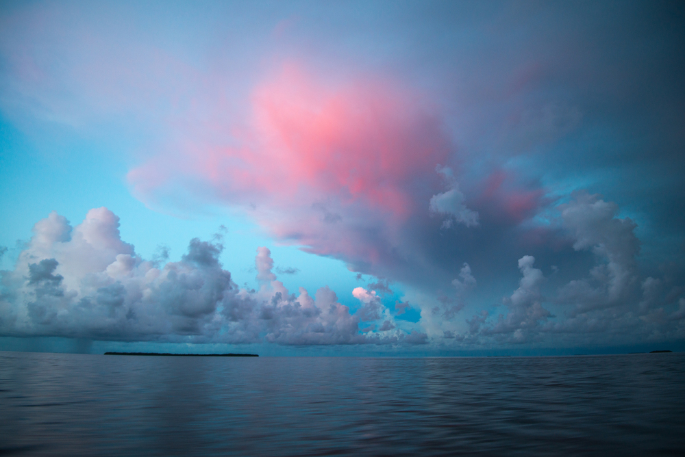 Experience the Best of the Everglades and Florida Keys   Multi-Day Expeditions ■  Full Day Charters
