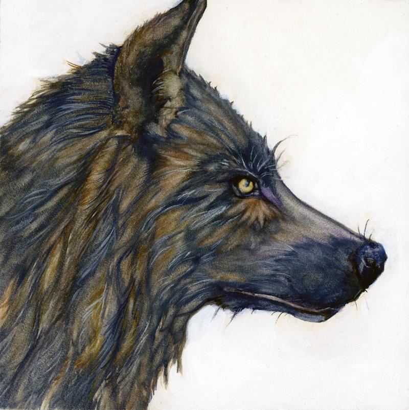 Tifani_carter_wolf_web.jpg