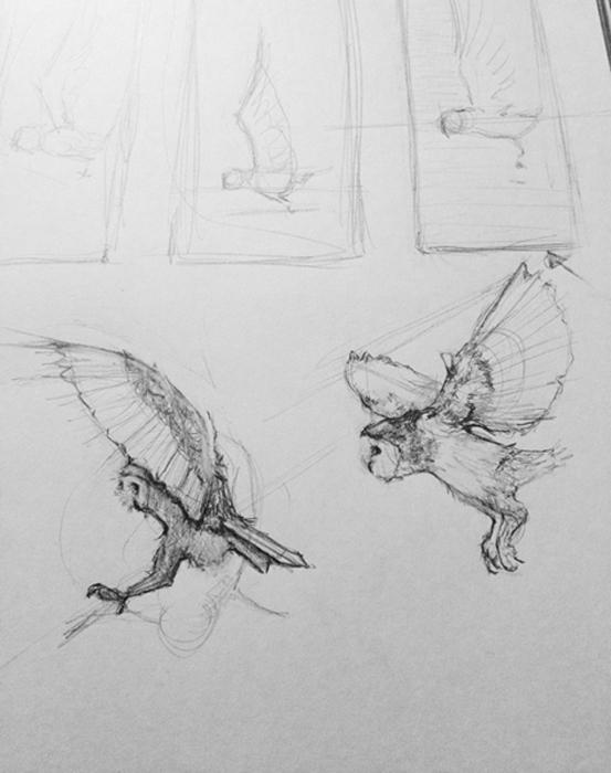 Tifani_Carter_Owl_Sketch2.jpg