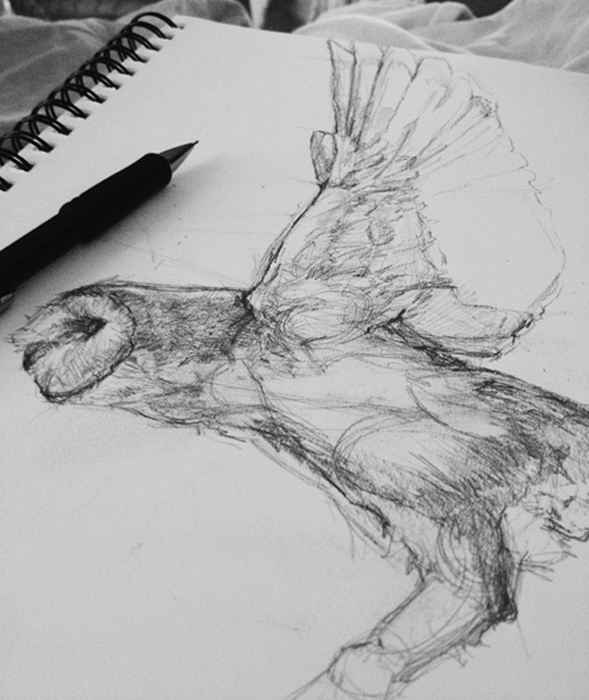 Tifani_Carter_Owl_Sketch1.jpg