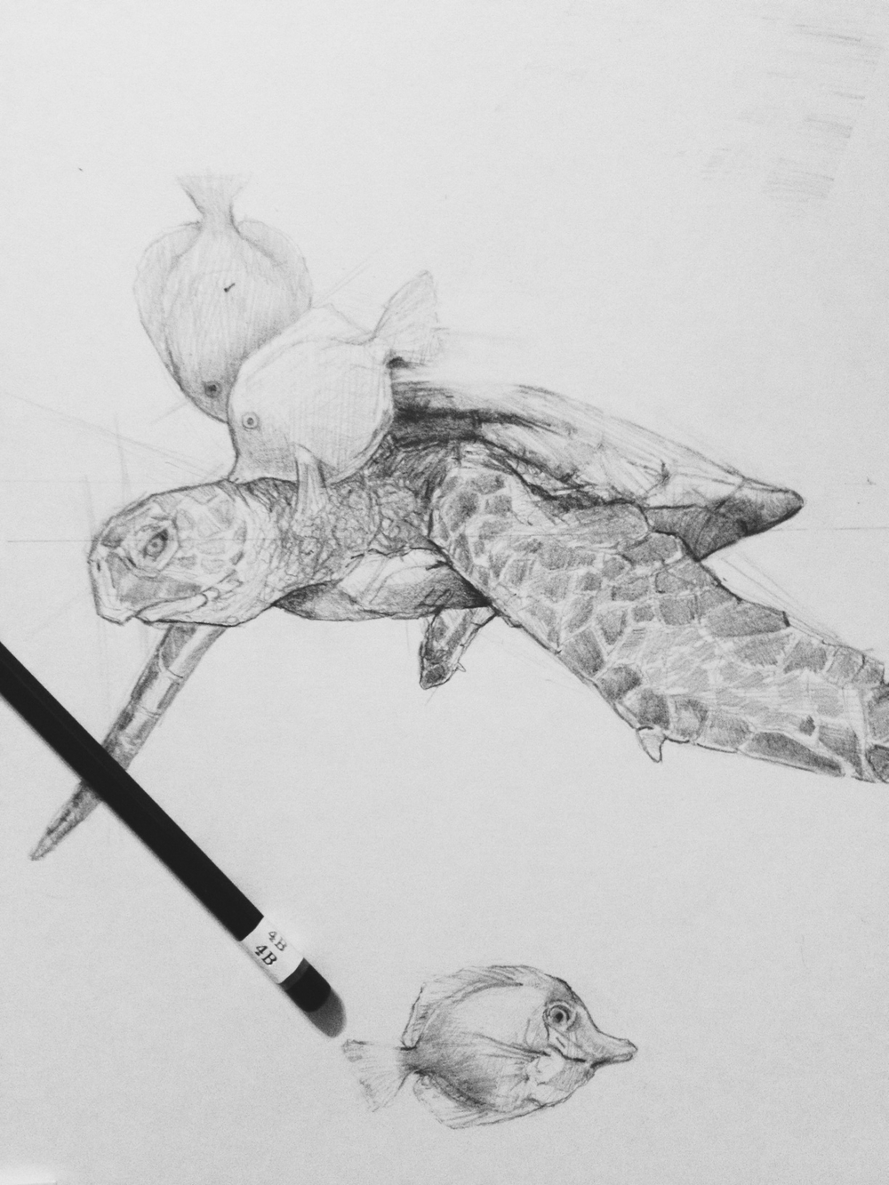 Tifani_Carter_seaturtle_sketch.jpg