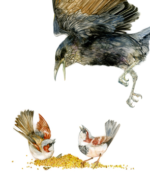 Tifani_Carter_Crow_Sparrow_web.jpg