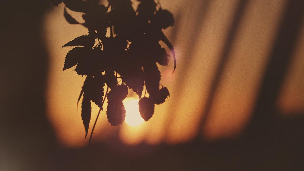 Hop Silhouette.jpg