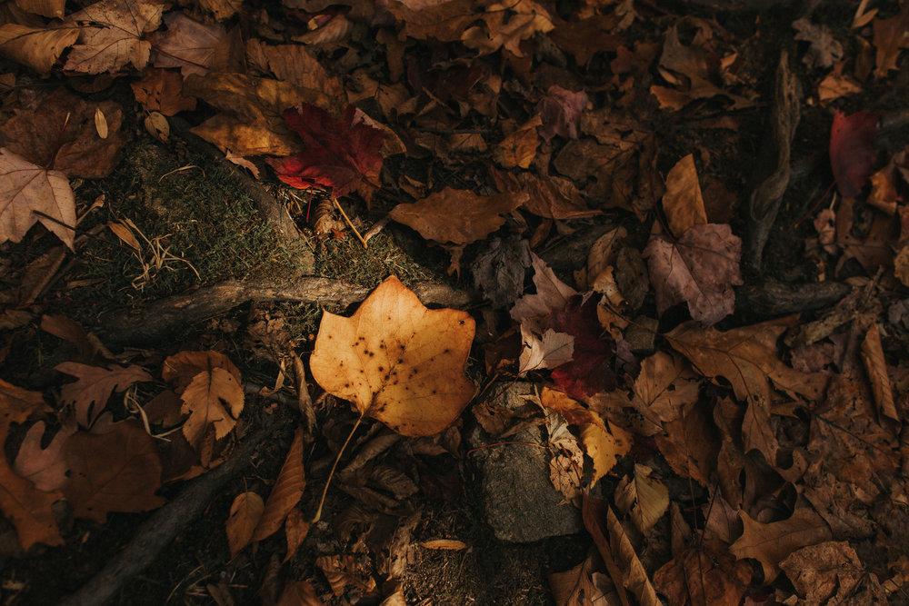 lehigh-valley-pennsylvania-nature-photography
