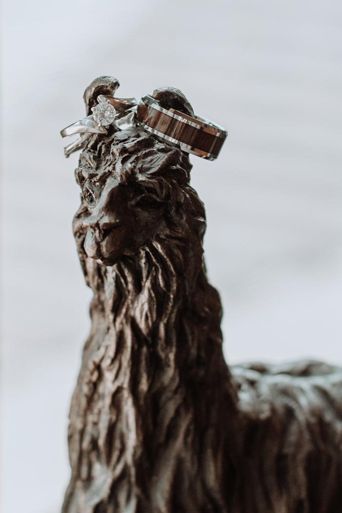 woods-edge-farm-llama-ring-shot