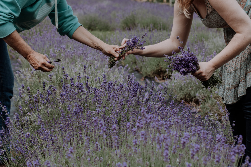 peace-valley-lavender-farm-natural-philadelphia-photography-5