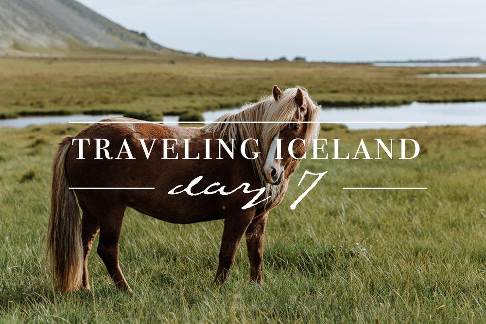 traveling-iceland-day-7-icelandic-horses-photography