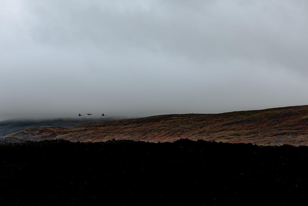 snaefellsnes-peninsula-berzerkjahraun-landscape-birds